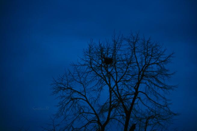 darknesstree-old-nest-sky-winter-swittersb