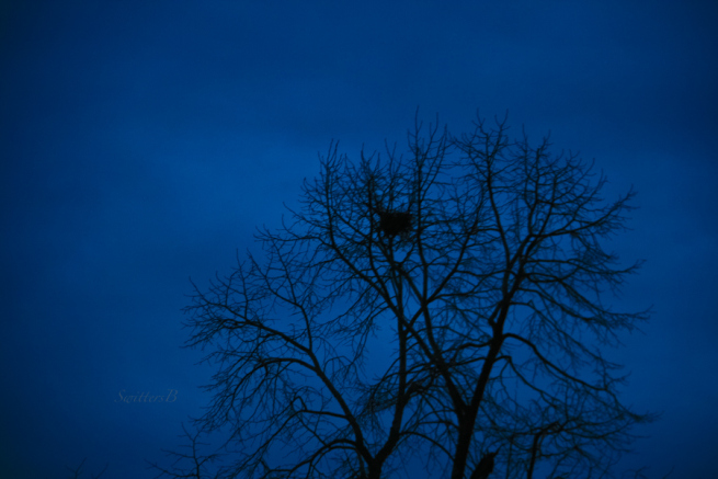 darknesstree-old-nest-sky-winter-swittersb